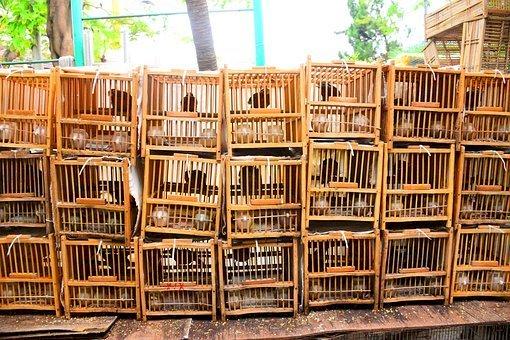 中國賣寵物用快遞 上萬動物被困6天死九成