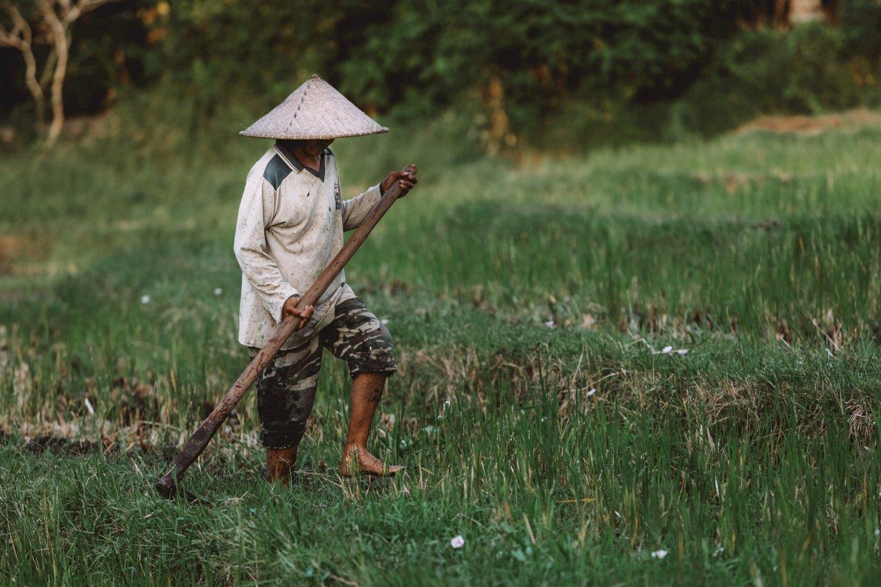從未終結的苦難》吳祚來自述7 公與私:自留地是村民的命根子