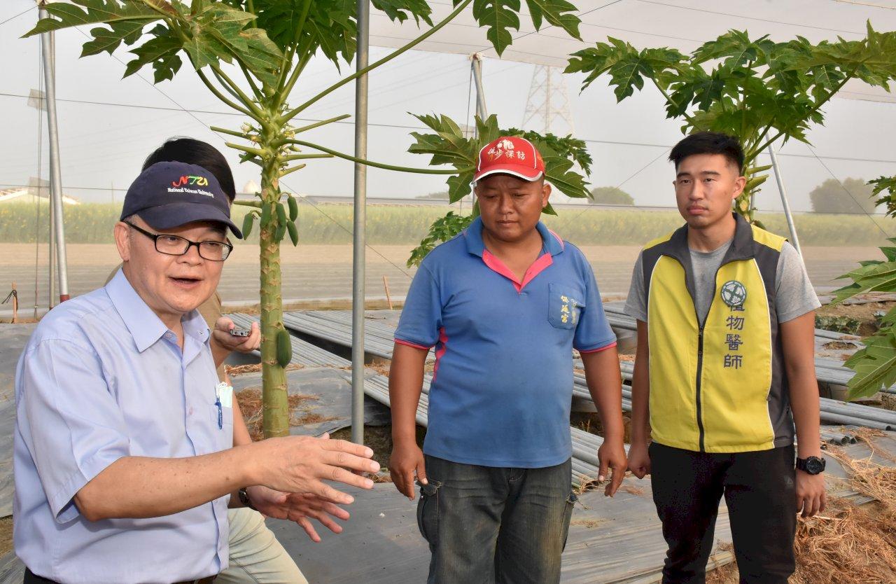 農民種不出好木瓜 台大「植物醫師」成功解救