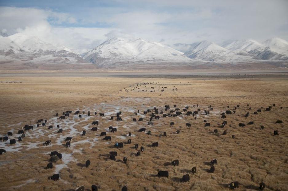藏區的圈地運動!把農牧民強制安遷 原來中共看上的是豐富的礦藏