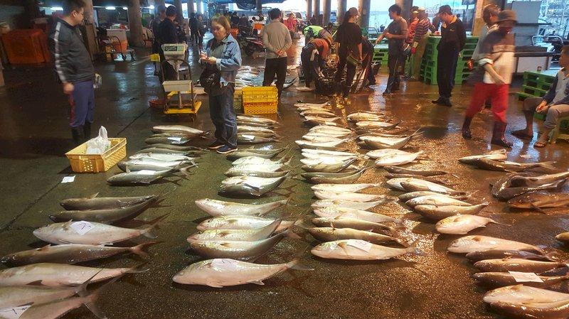 真正好吃的土魠魚如何分辨?