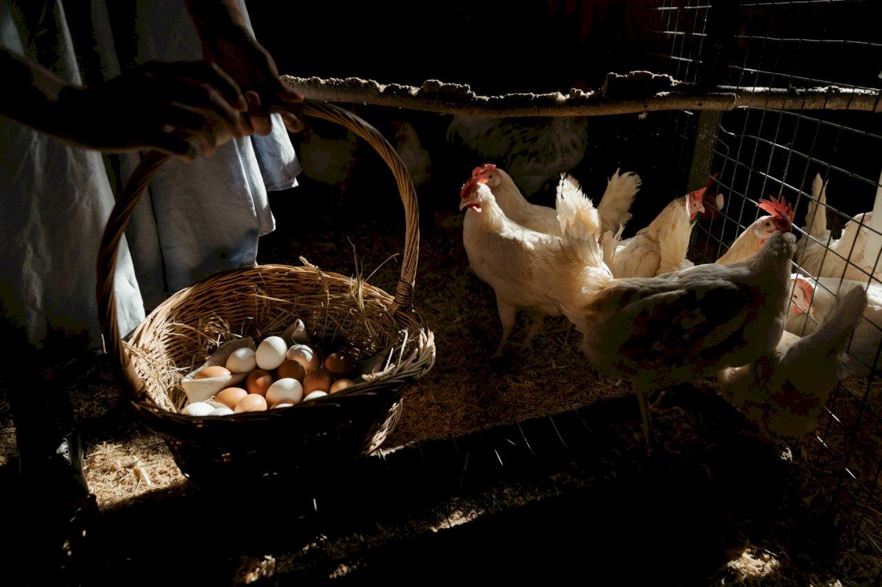 天冷進補需求大 2月雞肉價格飆漲創逾6年半新高