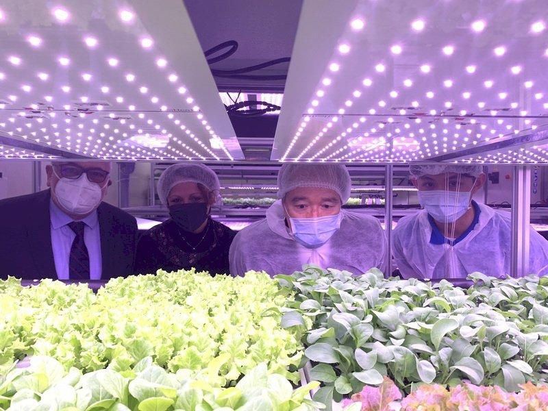 台梵合建智慧蔬菜工坊 首批採收製成義式料理