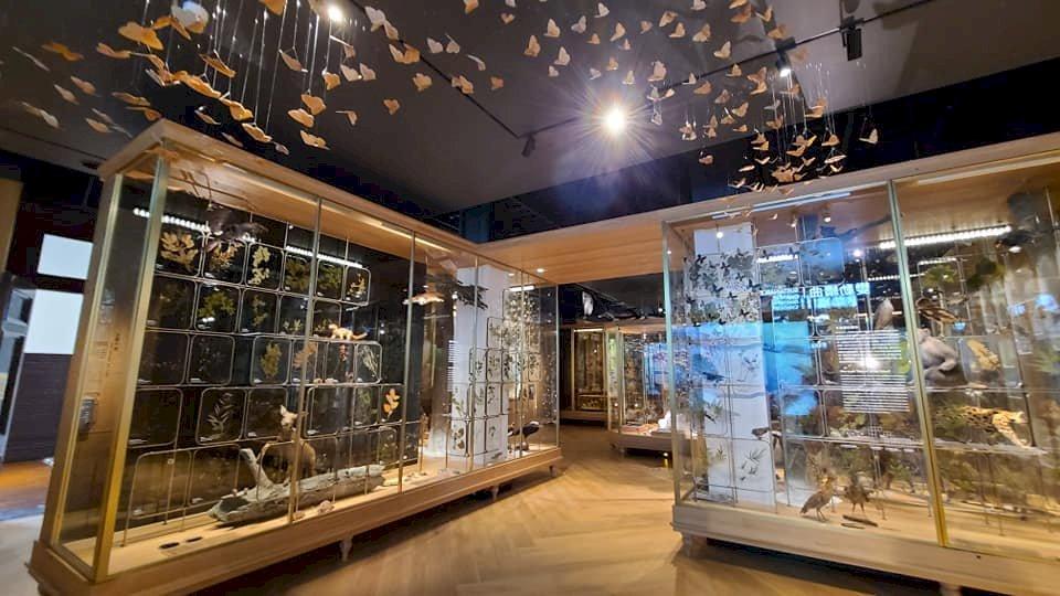 台博館更新常設展  「博物台灣」訴說寶島文化、生態多樣性