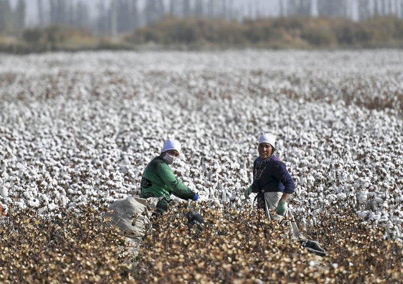 制定中國自己的棉花行業標準!中國啟動「未來棉花」計畫