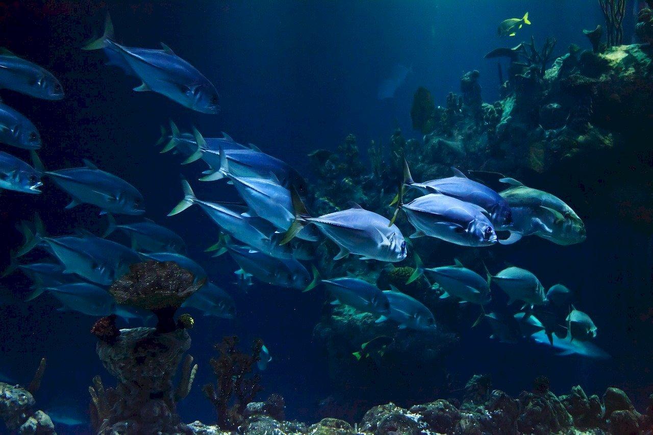 氣候變遷致赤道水溫上升 海洋生物朝南北極遷徙