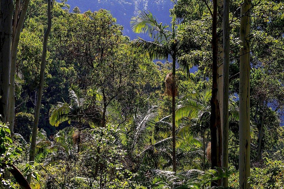 印尼走出霧霾伐林 保護雨林值得各國借鑑