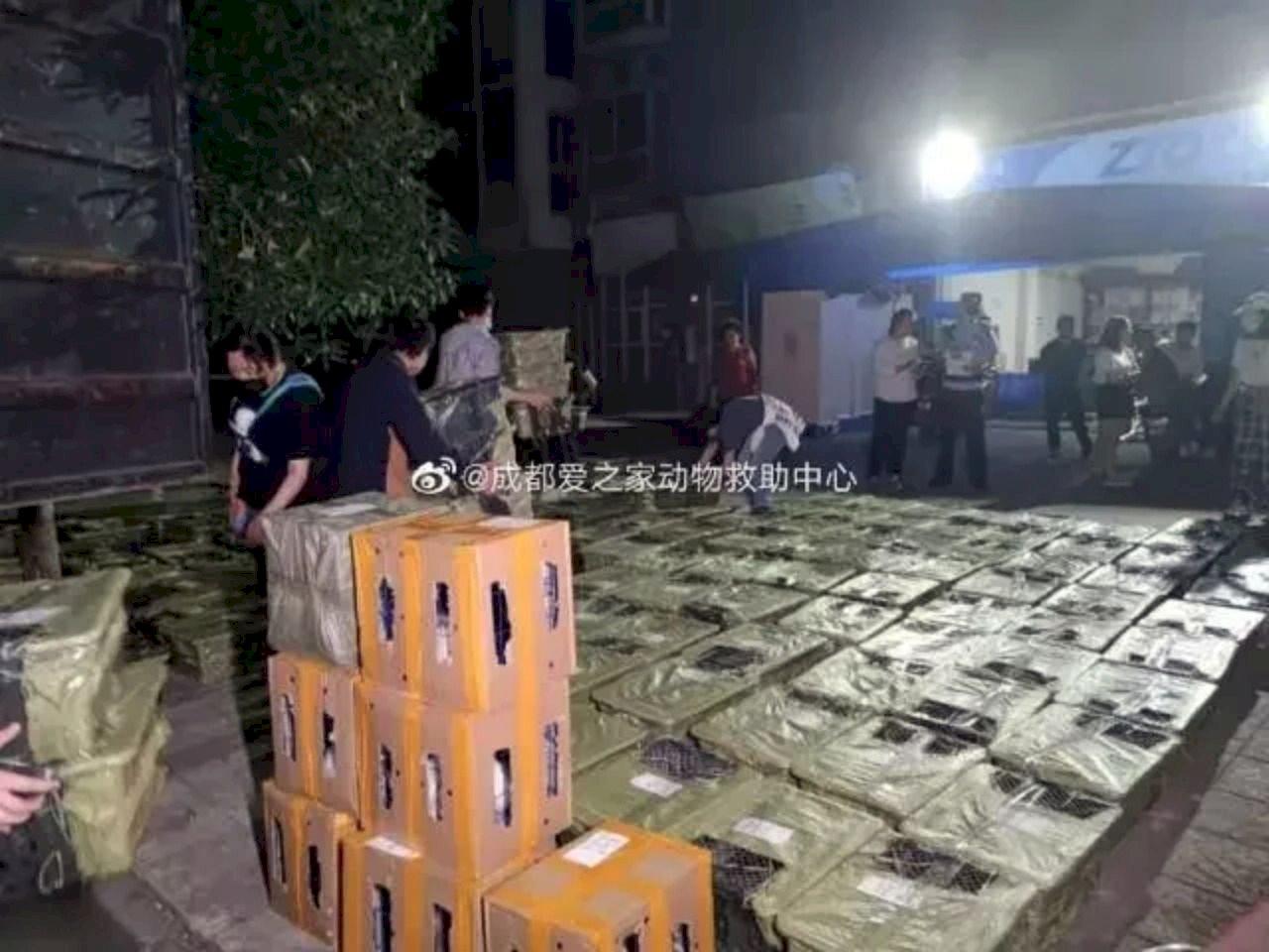 背離人性!中國業者賣「寵物盲盒」引眾怒