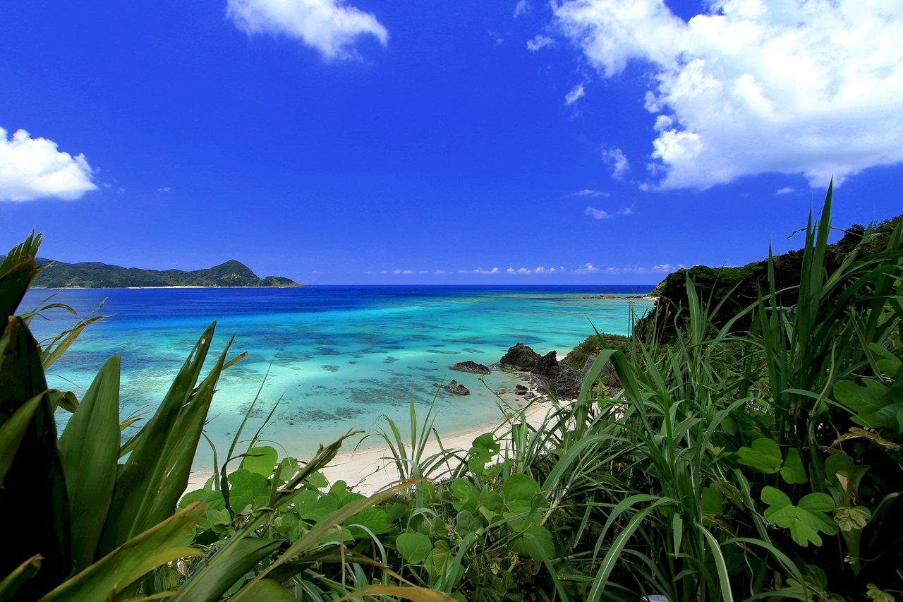 日本奄美大島等處 可望7月成為世界自然遺產