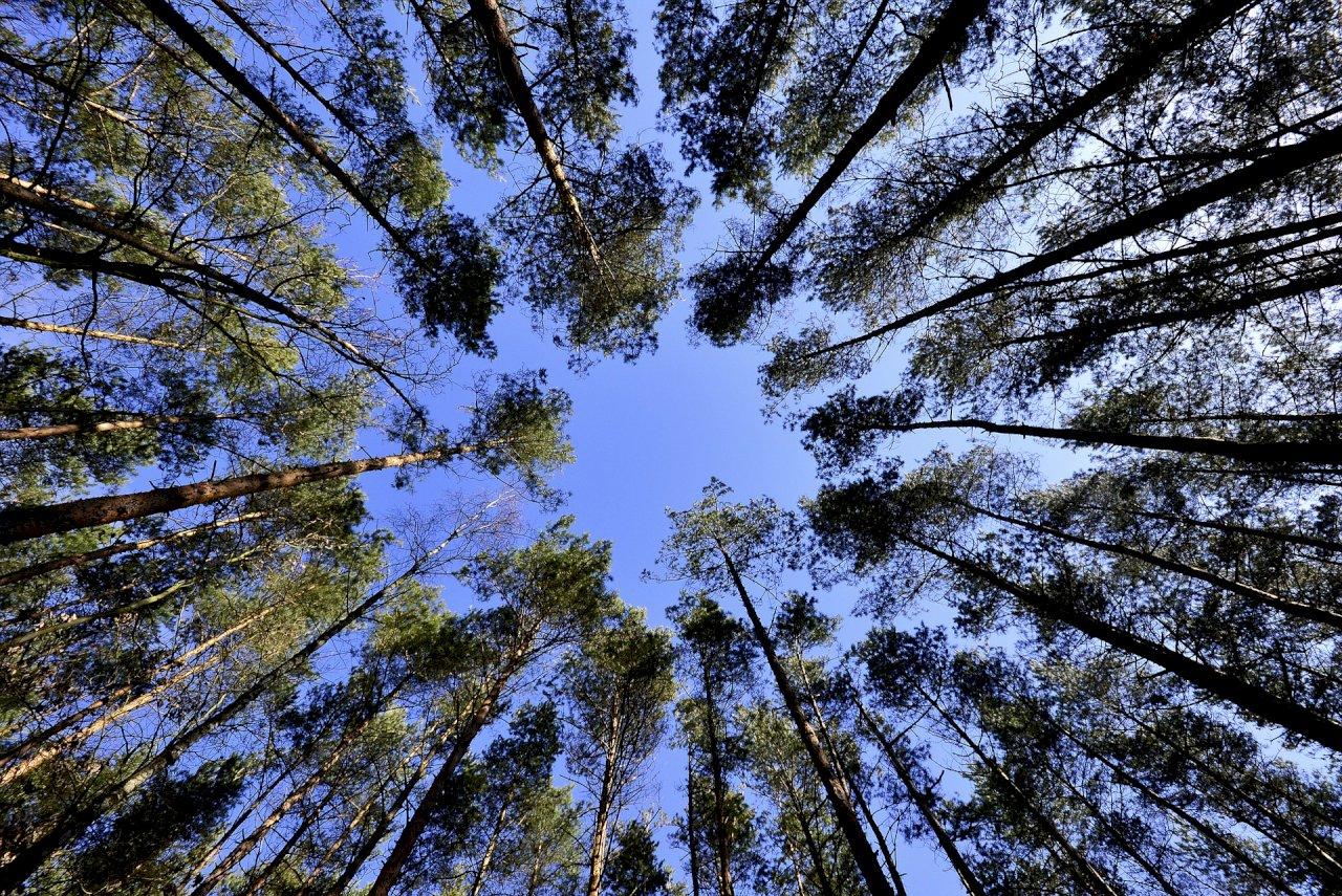 種樹救地球 英國將擴大林地對抗氣候變遷