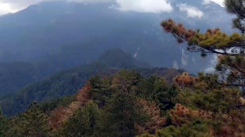 玉山森林大火終於滅了!林務局:鉅額成本絕對求償