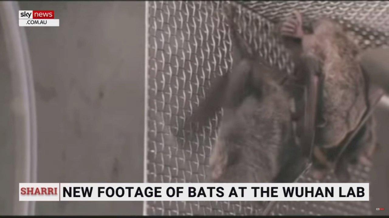 澳洲記者公佈影片再揭武漢P4實驗室疑飼養蝙蝠
