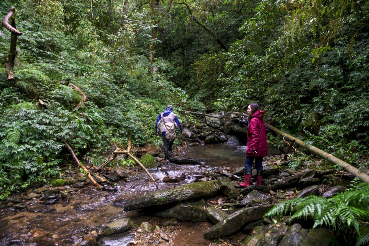 深入福山植物園的生態秘境