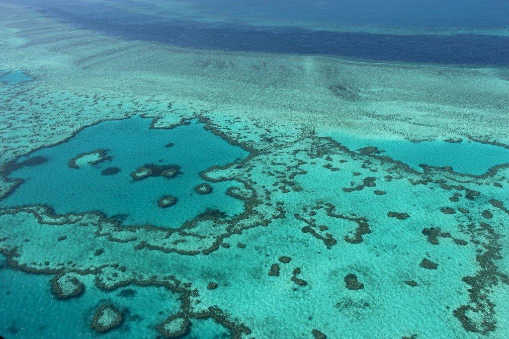 大堡礁恐遭列瀕危 澳洲氣候行動壓力升高