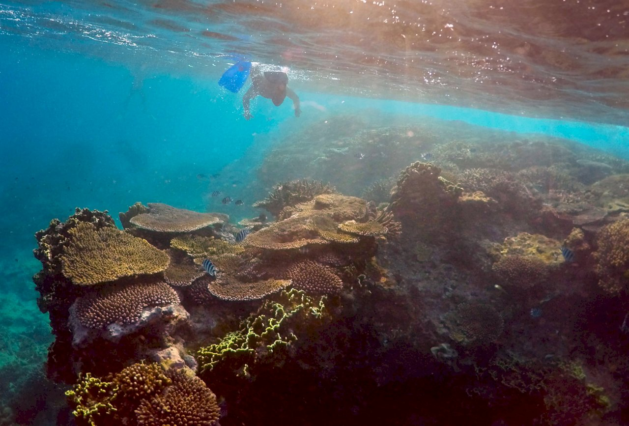 世界遺產地位堪慮 澳洲科學家:大堡礁復原中但前景仍糟