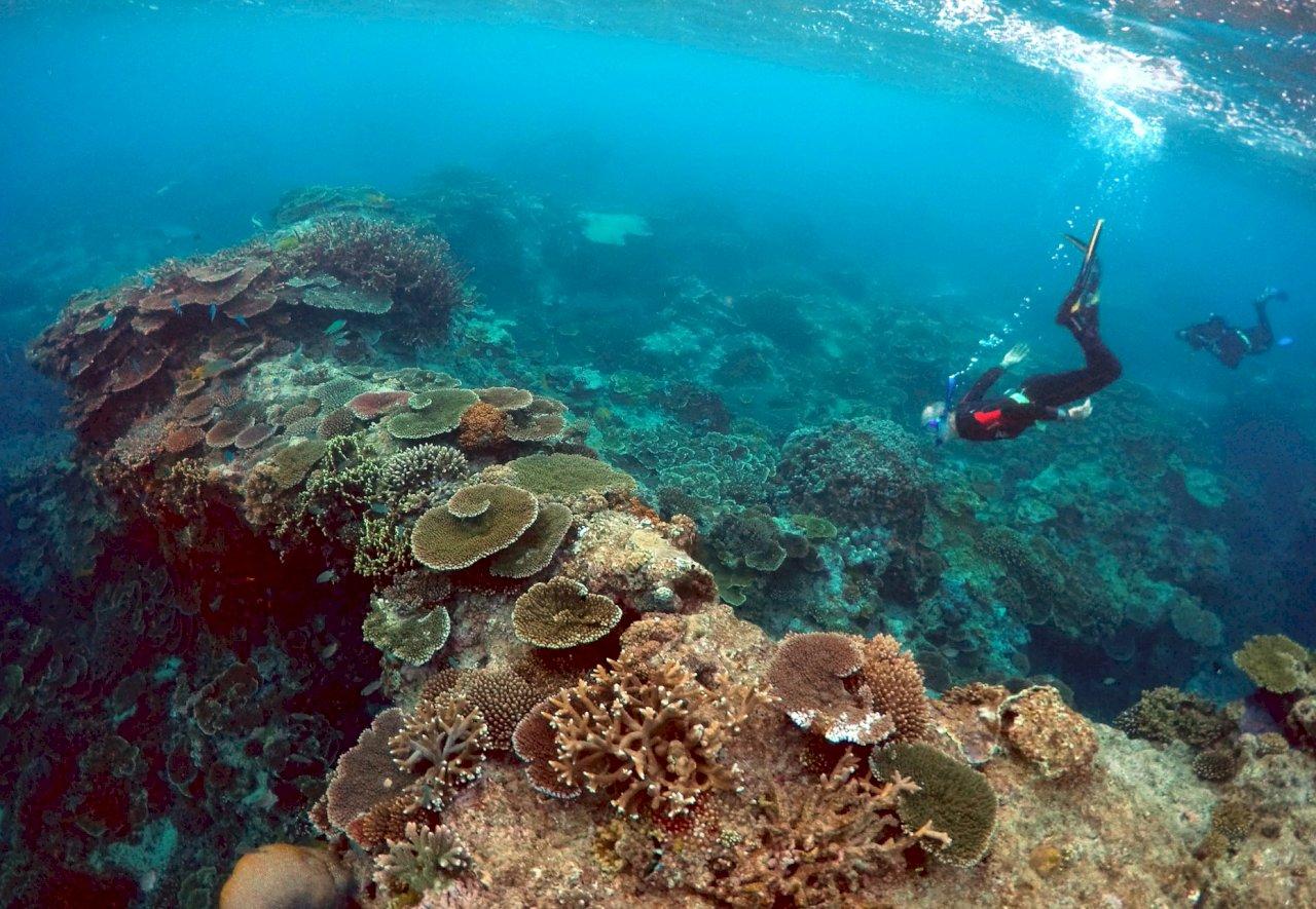 澳洲大堡礁復原中但前景黯淡 恐降級瀕危世界遺產