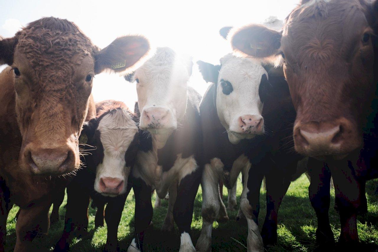 吃素救地球?淺談對抗氣候變遷與無肉不歡