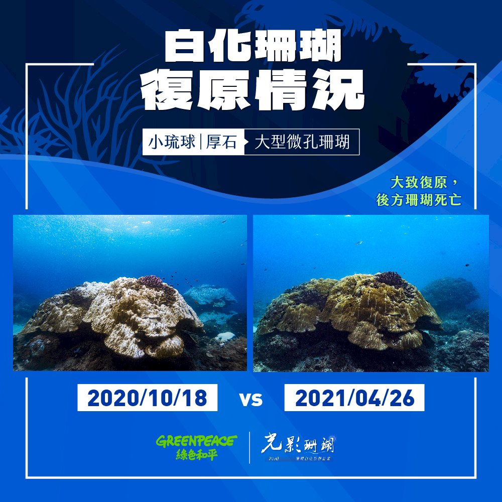 小琉球珊瑚告急 綠色和平發布紀錄片籲設保護區 (影音)