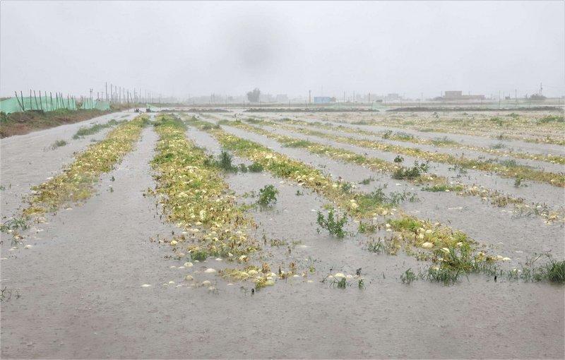 豪雨農損雲林最傷 農委會公告現金救助