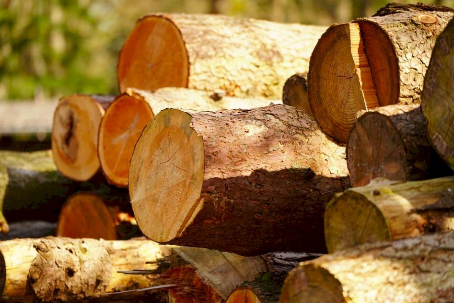 自己禁伐卻把魔掌伸向他國! 中國爆買法國橡木成當地產業與生態殺手