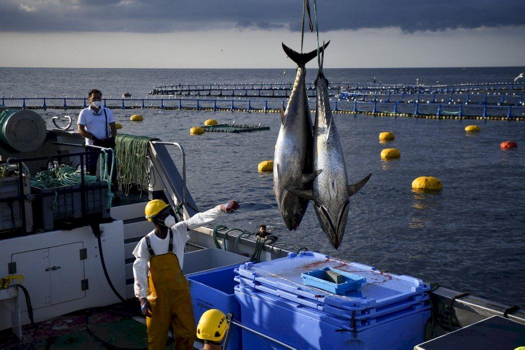 氣候變遷與過度捕撈 推升營養不良與糧食安全風險
