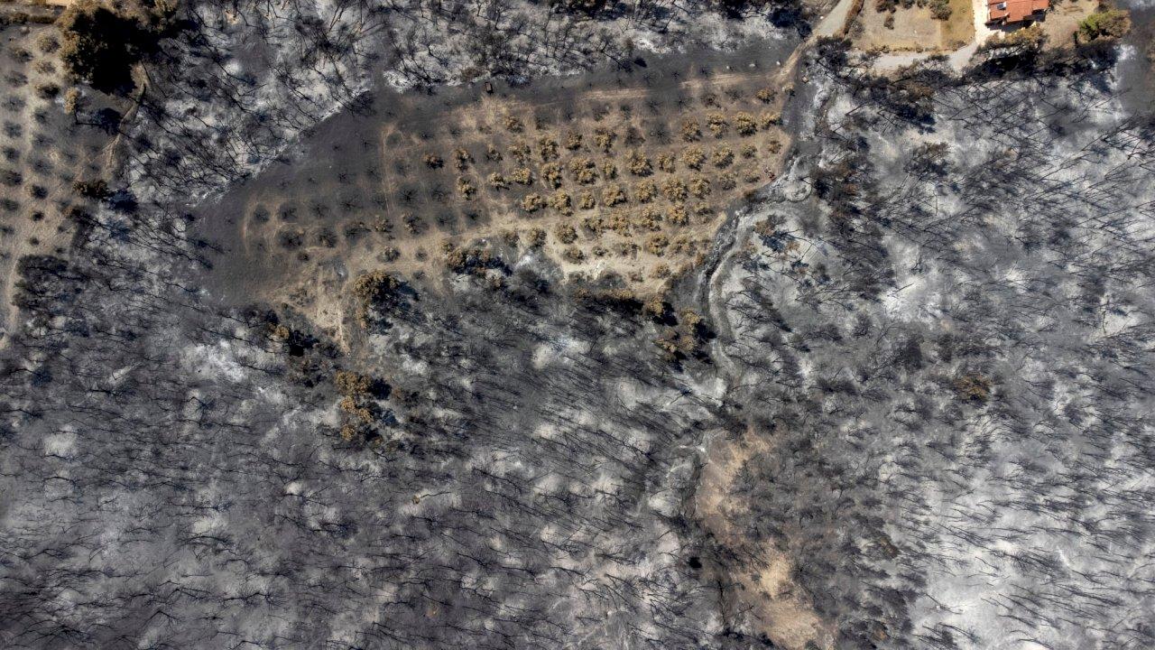 希臘第二大島再爆發森林大火 撤離數個社區