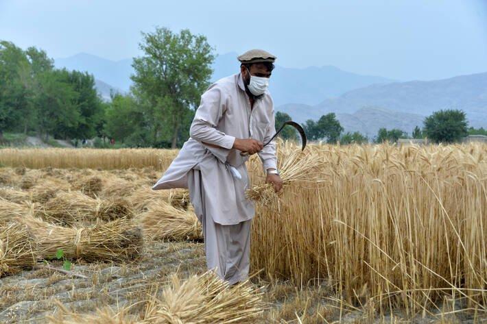 聯合國緊急呼籲 救救受乾旱衝擊的阿富汗農民