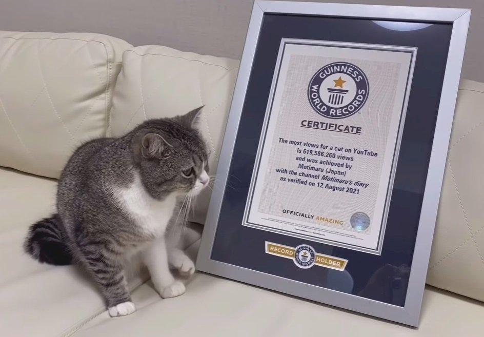 萌貓影片上YouTube 點閱逾6億世界第一