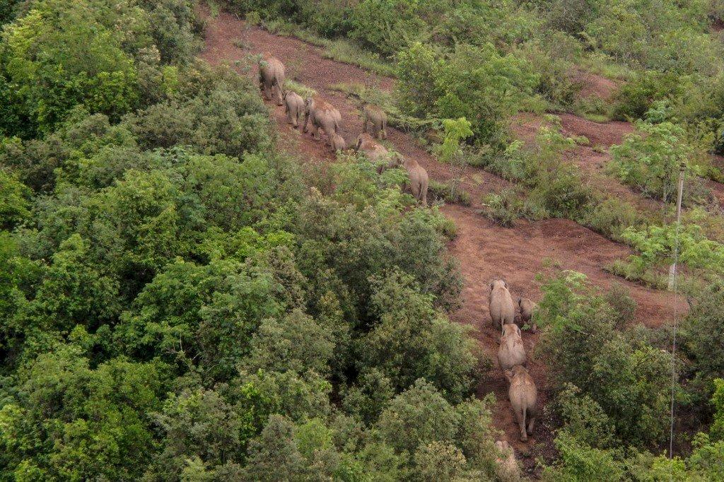 雲南北遷象群回家了完全進入傳統棲息地範圍