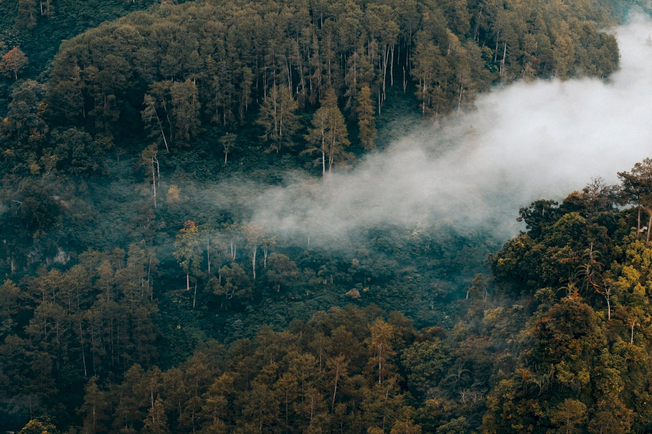 未收到付款 印尼終止與挪威的減少伐木合作
